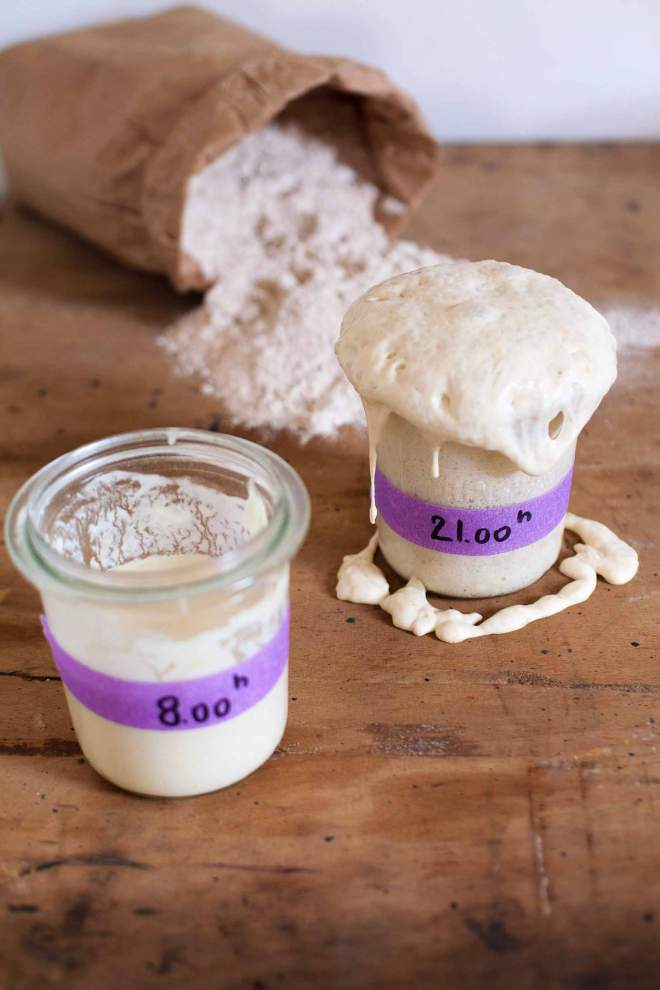Active Whole wheat Sourdough starter in a glass jar