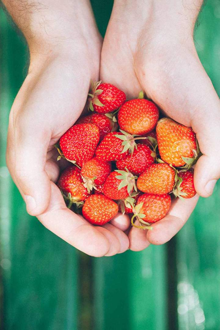 fresh homegrown strawberries held in hand
